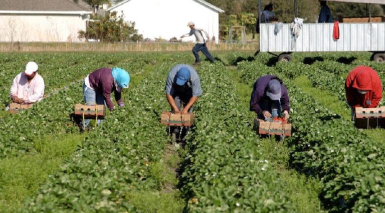 Scoperti 63 lavoratori in nero nel settore agricolo