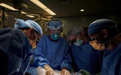 Primo trapianto di rene da maiale a essere umano